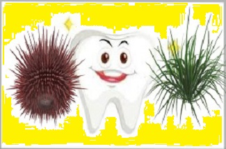 Болить зуб- SOS!