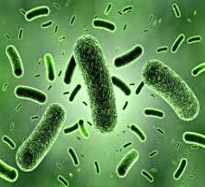 Що насправді захищає від передачі мікробів