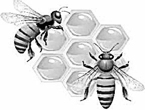 Використання пестициду гліфосат загрожує комахам